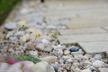 North-Berwick-garden_wee
